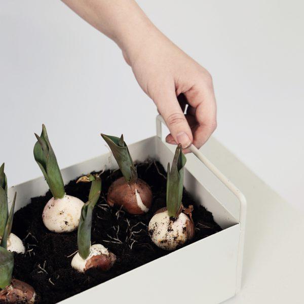 plantbox small white