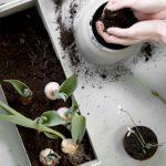 small plantbox black